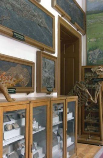 Muzeul de Paleontologie-Stratigrafie